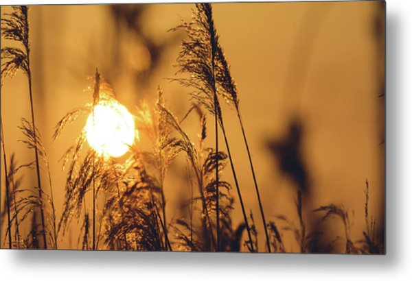 View Of Sun Setting Behind Long Grass C Metal Print