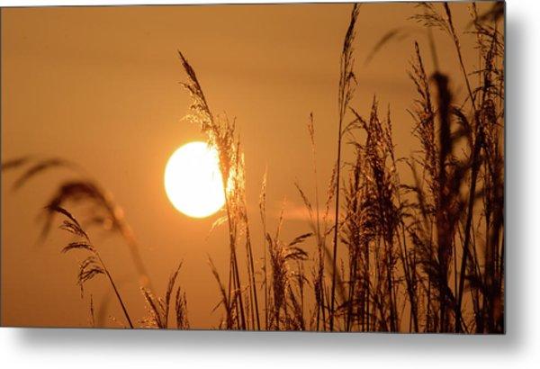 Metal Print featuring the photograph View Of Sun Setting Behind Long Grass E by Jacek Wojnarowski