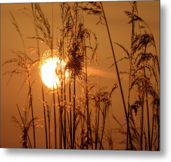 Metal Print featuring the photograph View Of Sun Setting Behind Long Grass F by Jacek Wojnarowski