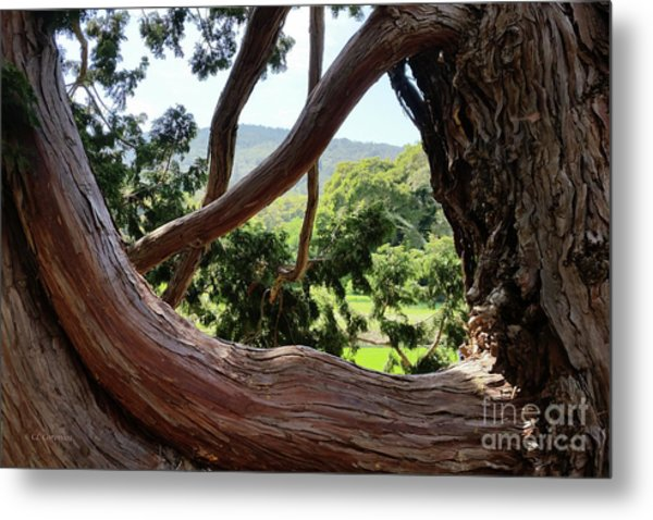 View Through The Tree Metal Print