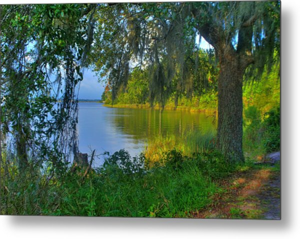 View Under The Spanish Moss Metal Print