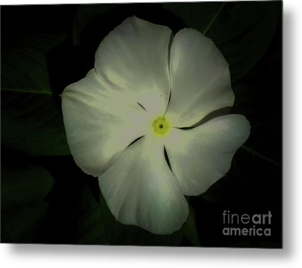 Vinca Bloom Night Glow Metal Print