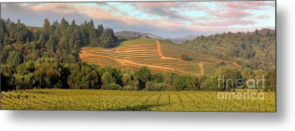 Vineyard In Dry Creek Valley, Sonoma County, California Metal Print