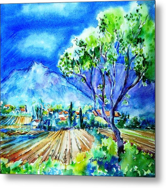 Vineyard Near Opoul In France  Metal Print by Trudi Doyle