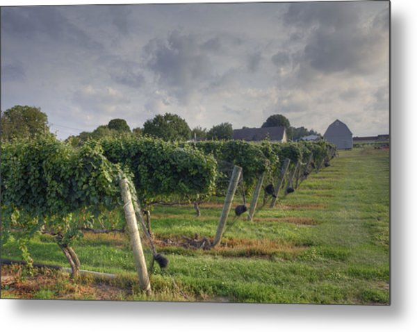 Vineyard With  Barn Metal Print