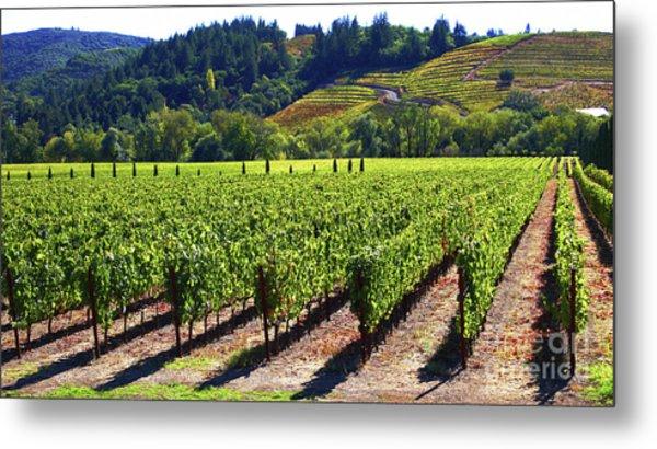 Vineyards In Sonoma County Metal Print