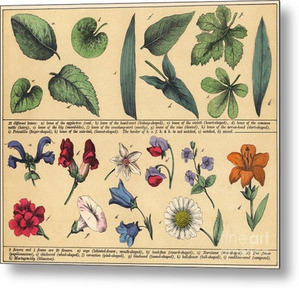 Vintage Botanical Print Showing Variety Of Leaves And Flowers Metal Print