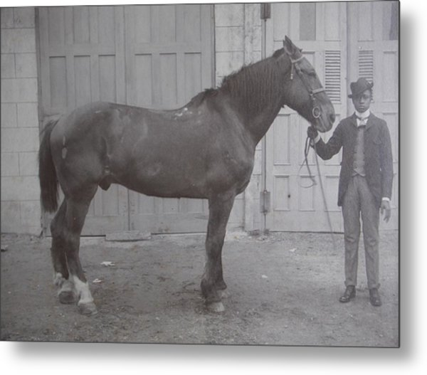 Vintage Photograph 1902 Horse With Handler New Bern Nc Area Metal Print