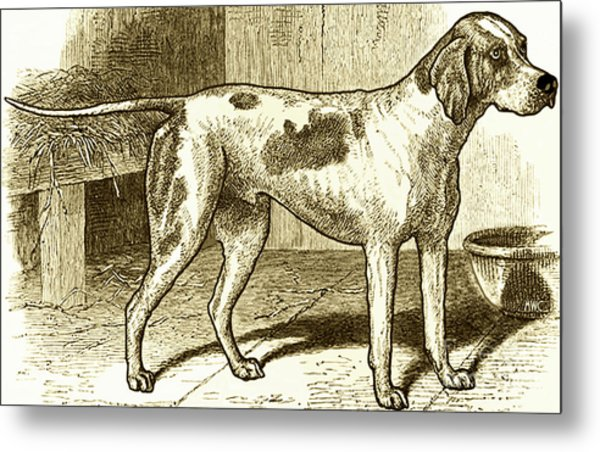 Vintage Sepia German Shorthaired Pointer Metal Print