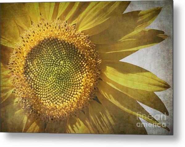Vintage Sunflower Metal Print