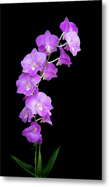 Vivid Purple Orchids Metal Print