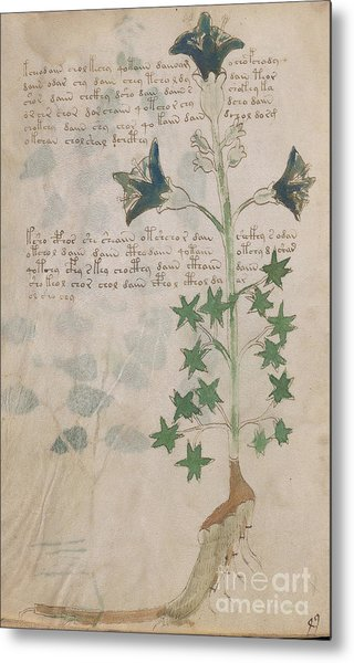 Voynich Flora 03 Metal Print