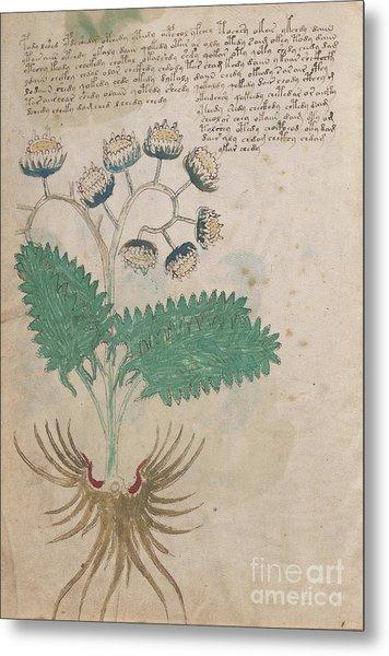 Voynich Flora 14 Metal Print