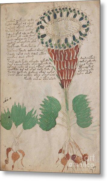 Voynich Flora 15 Metal Print