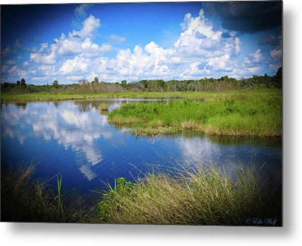 Wading Bird Way Metal Print