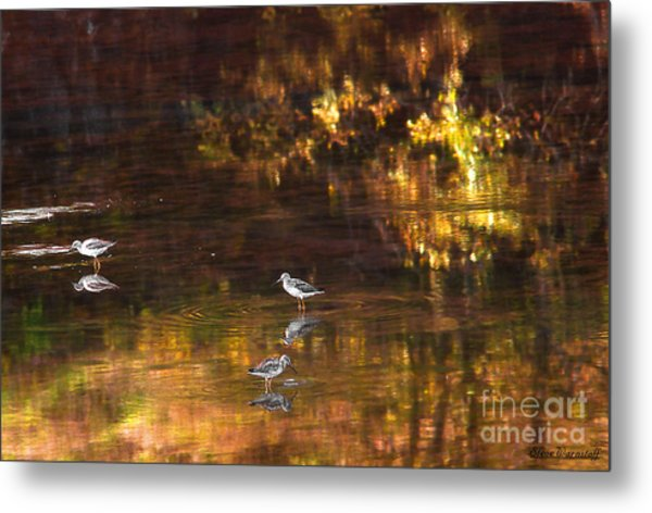 Wading In Light Metal Print