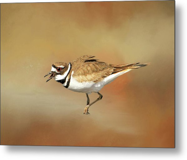 Wading Killdeer Metal Print
