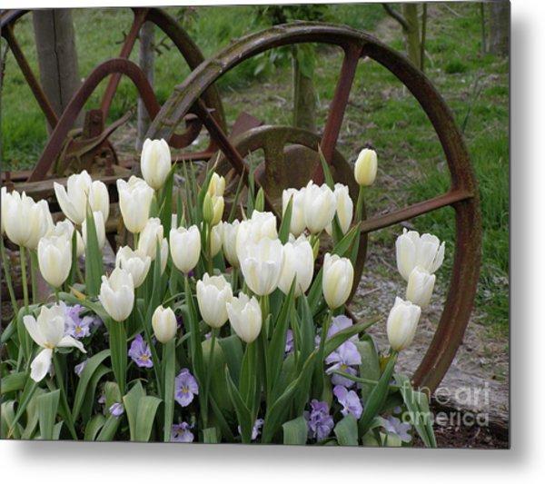 Wagon Wheel Tulips Metal Print