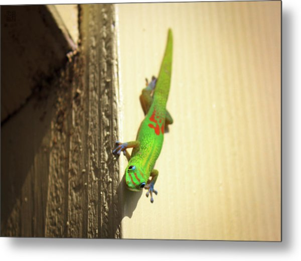 Metal Print featuring the photograph Waimea Gecko by Geoffrey Lewis