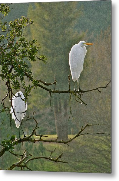 Waiting Egrets Metal Print