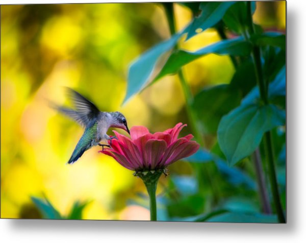 Waiting For Butterflies Metal Print