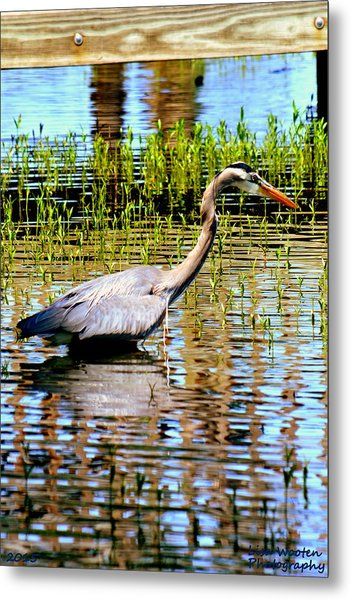 Metal Print featuring the photograph Waiting For Dinner by Lisa Wooten