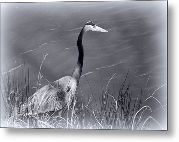 Waiting For Lunch Metal Print