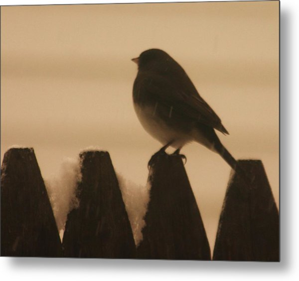 Waiting For Spring Metal Print by Dennis Curry