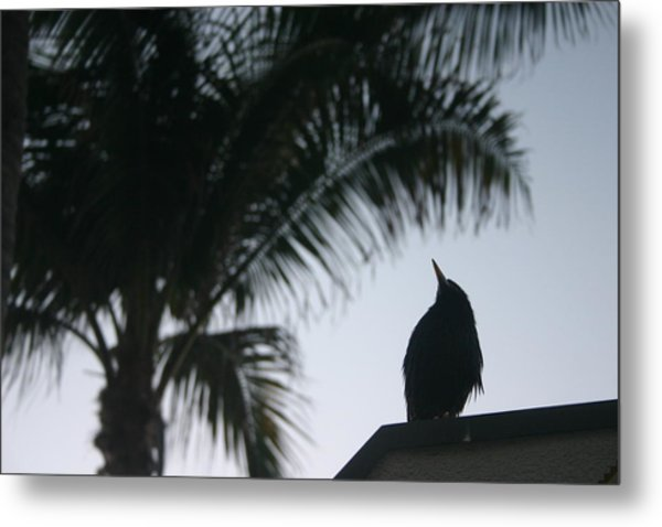 Waiting For Sunrise Metal Print by Dennis Curry