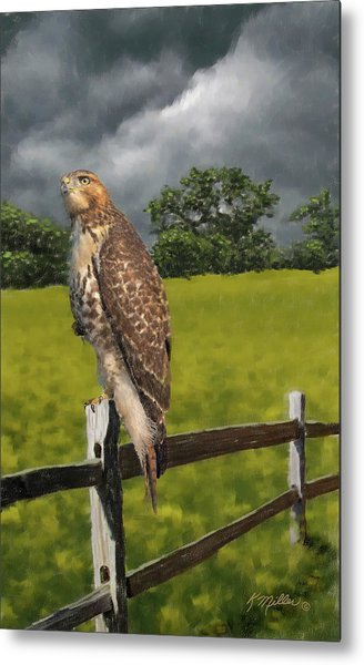 Waiting For The Storm - Red Tail Hawk Metal Print