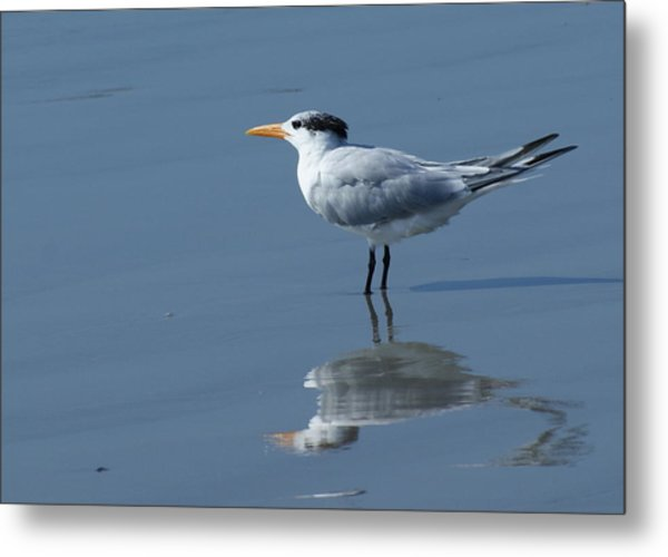 Waiting In The Surf Metal Print