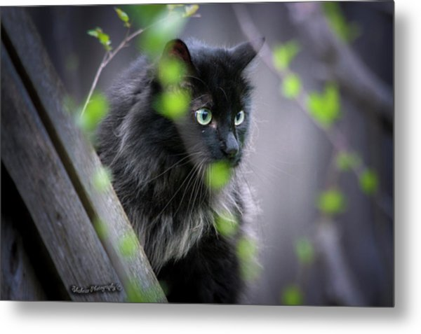 Waiting In The Wing Metal Print