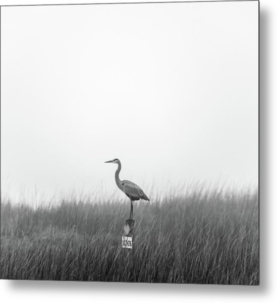 Waiting On The Fog To Clear Metal Print