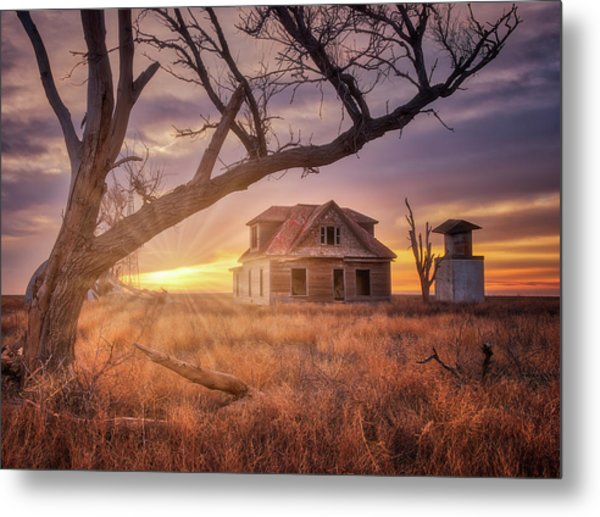Metal Print featuring the photograph Waking Up With A Friend by Darren White