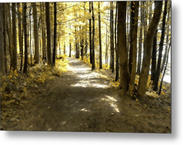 Walk In The Woods Metal Print