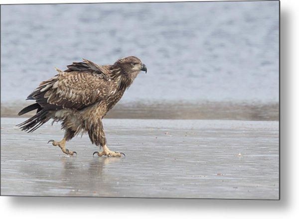 Walk Like An Eagle Metal Print