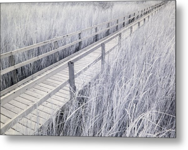 Walk Through The Marsh Metal Print