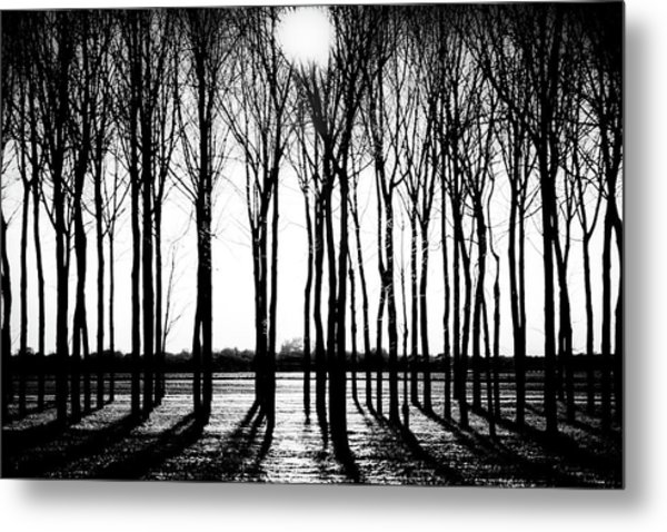 Walnut Grove Fall Evening Metal Print