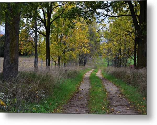 Walnut Lane Metal Print