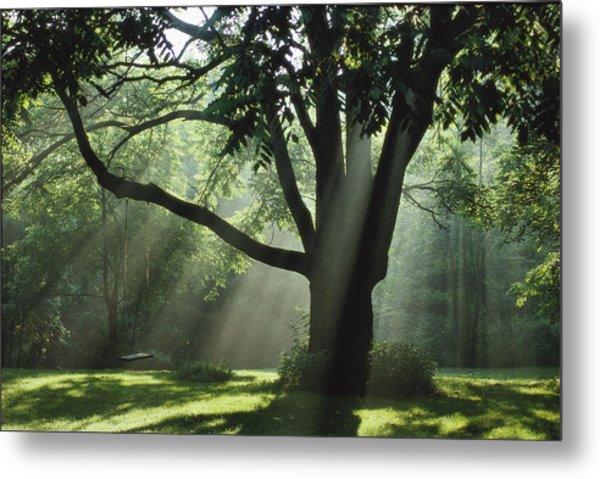 Walnut Tree And Swing Metal Print by Richard Danek