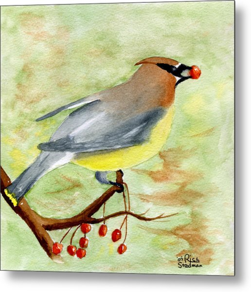 Walter Wax Wing Metal Print by Rich Stedman