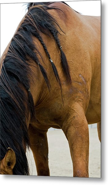 Metal Print featuring the photograph War Horse by Lorraine Devon Wilke