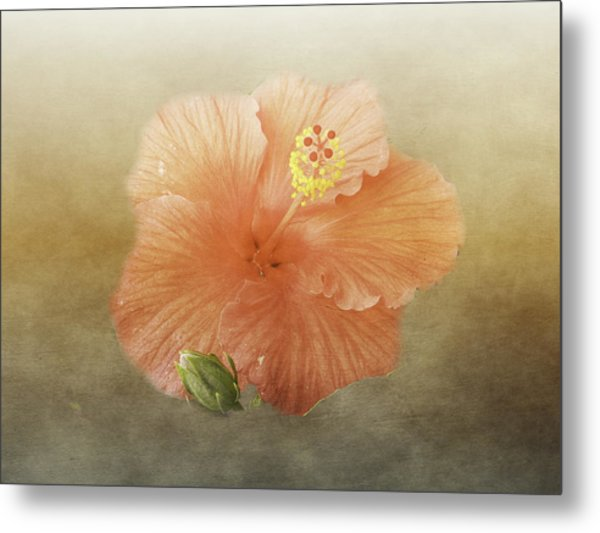 Warm Hibiscus Metal Print