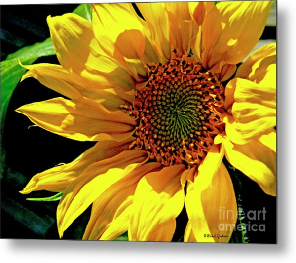 Warm Welcoming Sunflower Metal Print