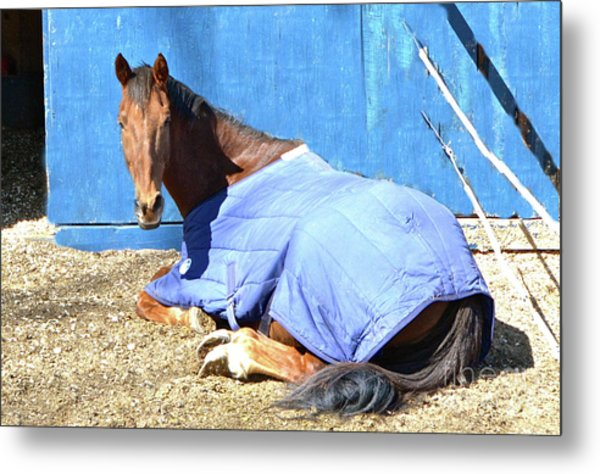 Warm Winter Day At The Horse Barn Metal Print