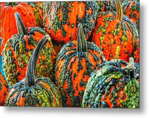 Warty Pumkins  Metal Print