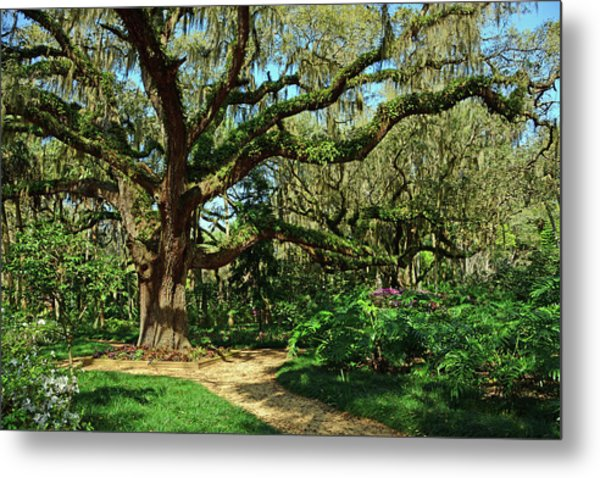 Washington Oaks Gardens Metal Print