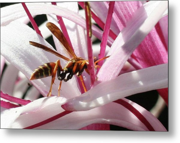 Wasp On Flower Metal Print by Francesco Roncone