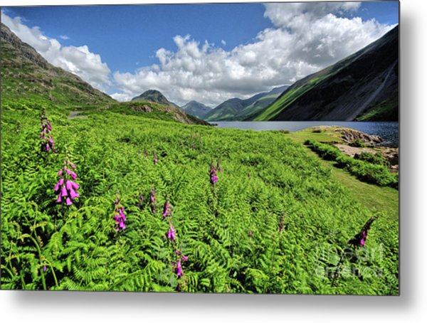 Wastwater Foxgloves Metal Print