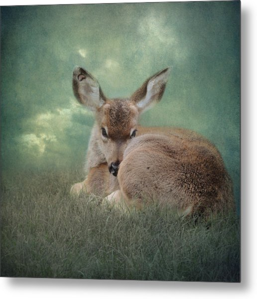 Metal Print featuring the photograph Watchful Eye by Sally Banfill